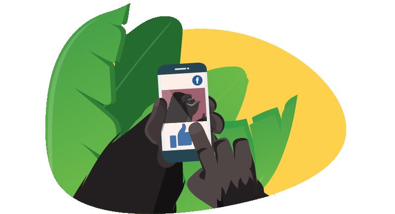 Gorilla on Facebook